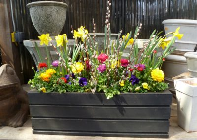 spring-Container-1